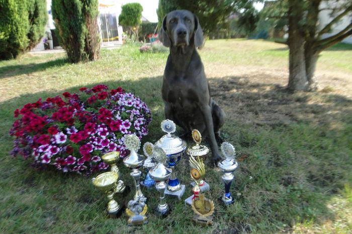 Aska mit Pokalen