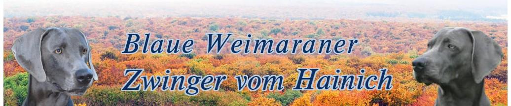 Blaue Weimaraner - Zwinge vom Hainich